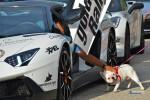 goldRush-Rally-7-Automotive-Addicts-CnC-2015063